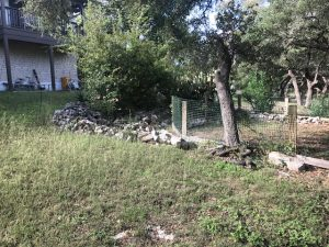 overgrown-backyard-planter